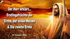2006-06-04 - Erstlingsfruchte der Ernte-Wilde Schafe Weizen-Die zweite Ernte des Herrn-Die Trompete Gottes