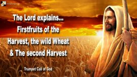 2006-06-04 - Firstfruits of the Harvest-Wild Sheep Wheat-The second Harvest of the Lord-Trumpet Call of God