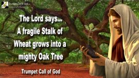 2010-10-28 - A fragile Stalk of Wheat-an old mighty Oak Tree-Sickle Axe Cut down Cedars-Trumpet Call of God